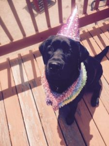 Photo of dog celebrating birthday at K9 Cabin Dog Day Care.